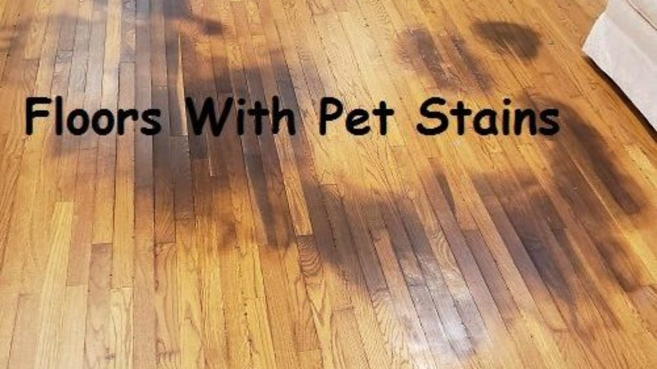 Refinishing Hardwood Floors With Pet Stains Options For Fixing